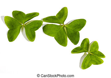 Three Bright Green Clovers on White Background