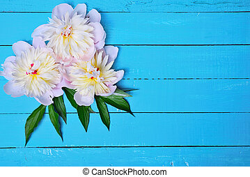 Three buds of a white peony with green leaves
