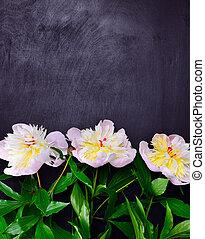 three buds of flowering pions