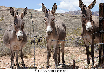 Three Burroughs in the Las Vegas Desert
