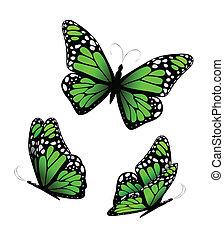 Three butterflies in green tones. Vector