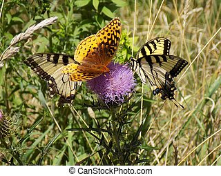 Three Butterflies on a Pink Thistle