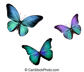 Three butterfly , isolated on white background