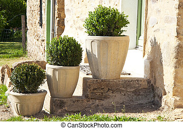 Three buxus on stairs used as background