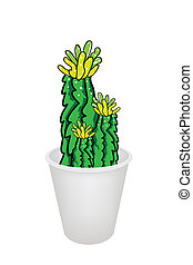 Three Cactus Plant and Flower in Flowerpot