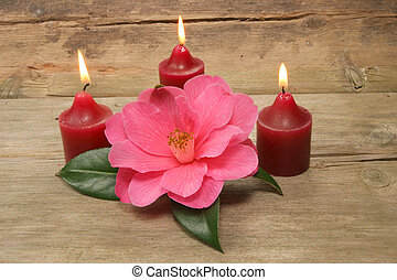 Three candles and camellia