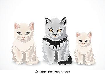 three cats, family