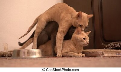 Three cats gay love each other