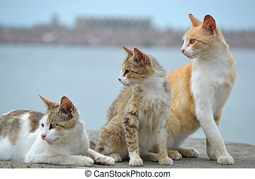 Three cats look
