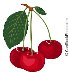 Three cherries on a branch.