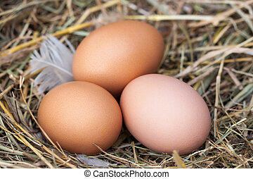 Three chicken eggs lying in the nest of straw