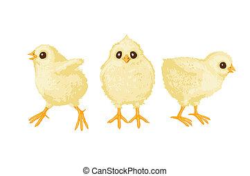Three chickens - illustration of three chickens on white...