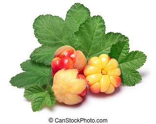 Three cloudberries (Rubus Chamaemorus) with leaves