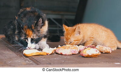 three-color, chatons, chat, sdf, soins, viande, rue, manger