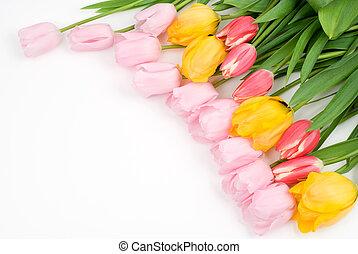 Three color tulip