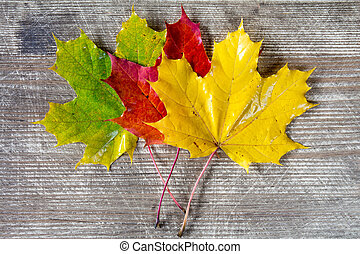 Three colored fall leaves.