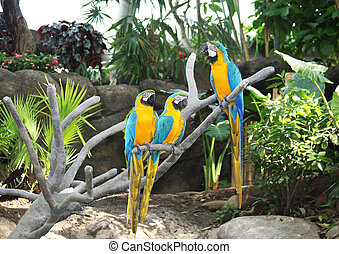 three colorful parrots are sitting on the branch of a tree