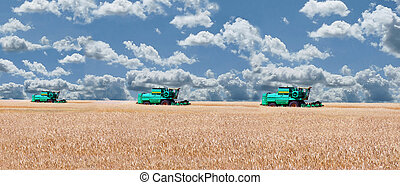 Three combine threshing grain in a wheat field