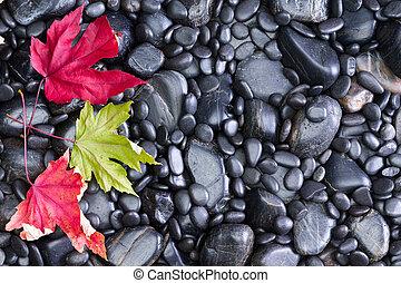 Three Conceptual Leaves on Black River Rocks