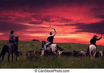 Three cowboys drive herd of horses on a sunset