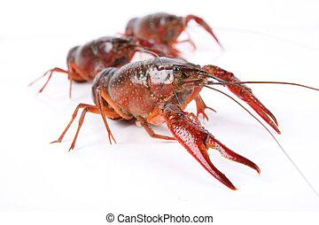 three crawfish isolated on white background