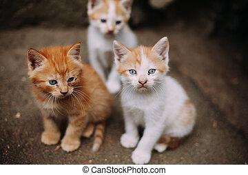 Three cute homeless white and ginger kittens