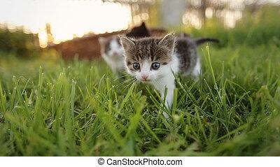 Three cute kittens walking on the grass.