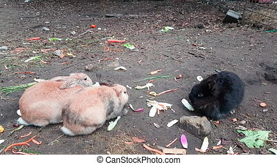 Three Cute Rabbits Eating Vegetables
