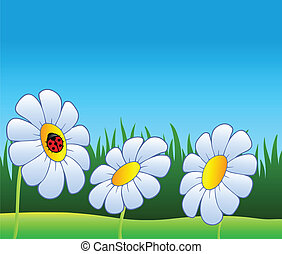 Three daisies and ladybug - vector illustration.