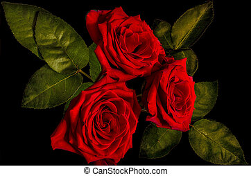 Three dark red roses bouquet close up on black background