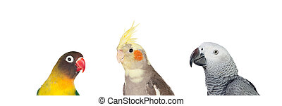 Three differents tropical birds isolated on a white...
