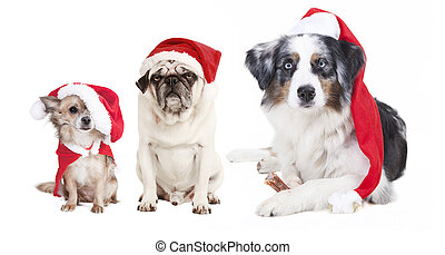 three dogs Christmas