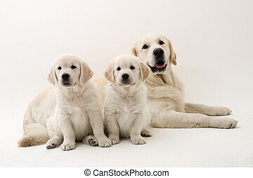 Three lovely dogs resting
