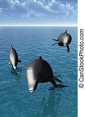 Three dolphin