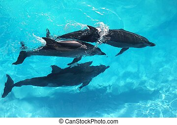 three dolphins high angle view turquoise water swimming