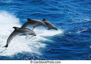 Three dolphins - Marine wildlife background - three ...