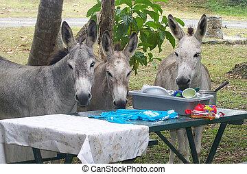 Three donkeys washing dishes