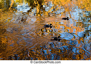 Image of three ducks swimming on a reflective pond