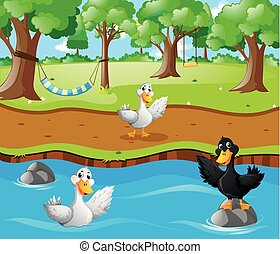 Three ducks in the river