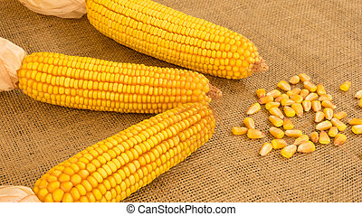 Three Ears of Corn