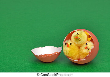 Three easter chicks in an egg shell