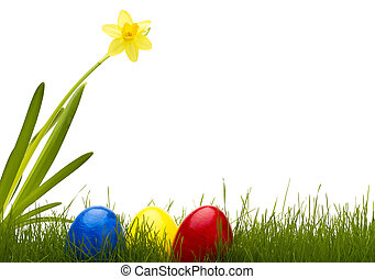 three easter eggs in grass with a daffodil with white background