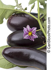 Three eggplant and a flower