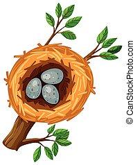 Three eggs in the bird nest