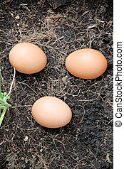 Three Eggs on ground.