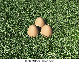 Three Eggs on the grass