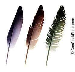 Three feathers isolated on a white background