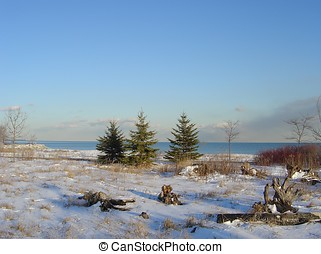 Three Fir-trees - Ontario Lake, Kipling Park, Toronto