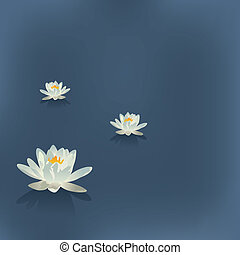 Three flowers of a lily in the lake on a blue background