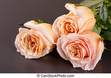 three fresh beige roses on a dark wooden background
